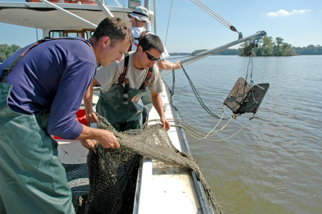 Former postdoc Eric Johnson (left) and SERC biologist Rob Aguilar trawl the Rhode River for blue crabs so that they can monitor their population and health. (Credit: SERC)