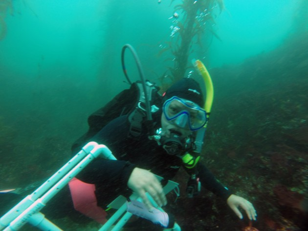 SERC diver Lina Ceballos helps conduct surveys of the rocky reefs off central California's coast to determine where, when and how introductions of non-native marine species occur and how they spread along the west coast. (Photo by Michelle Marraffini)