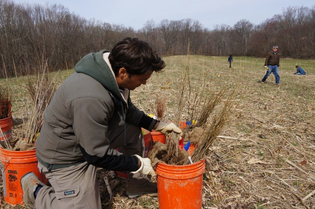 Smithsonian ecologist John Parker examines just a few of the 24,000 tree saplings that will one day turn this Maryland cornfield into a mature forest. During the next 100 years, Smithsonian scientists will examine how varying levels of species diversity affects the forest's development and how it reacts to climate change.(Photo by John Gibbons)