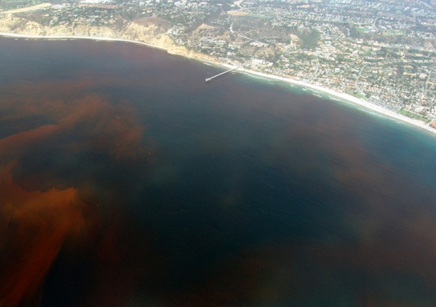 Algae blooms are often referred to as red tides because of their red color in the water. Red tides, like this one in La Jolla, Calif., can form as a result of nutrient pollution. (Flickr photo by Alejandro Díaz)