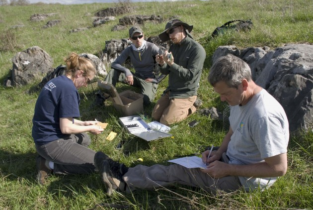 Researchers Dr. Priscilla Joyner, Sergio Harding, Rich Bailey and Warren Lynch measure a captured shrike in the field. (Photo by Lisa Ware)