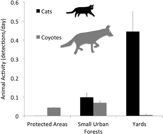 The average detection rate of cats compared with coyotes during a two-year study looking at how common the two predators are in various habitats showed that cats are 300 times more common in backyards—where coyotes are rarely found—versus in protected wooded habitats, where virtually no cats are found.