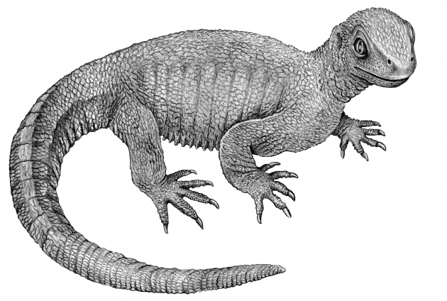Pappochelys could grow up to 8 inches in length, had a long tail and used its tiny, peg-like teeth to feed on small insects and worms in what is now southern Germany. In June 2015, an international team of researchers from the United States and Germany discovered this new extinct species of reptile and identified a key missing link in the evolutionary history of turtles.