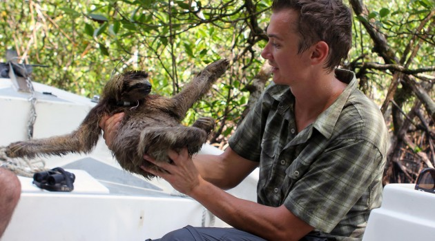 Bryson Voirin, former fellow at the Smithsonian Tropical Research Institute in Panama, placed radio collars on 10 sloths on the island of Escudo de Veraguas and tracked their unhurried movements. (Photo by Matthew Manupella)