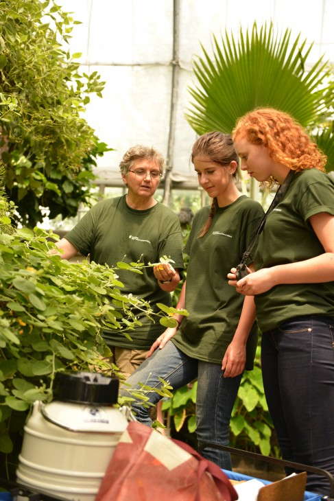 As part of the Global Genome Initiative's commitment to train the next generation of genomic scientists, National Museum of Natural History curator, Vicki Funk, works with members of the summer field team to collect samples from the U.S. Botanic Garden. (Photo courtesy U.S. Botanic Garden)