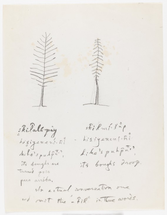 Barbareno ethnographic notes - John Peabody Harrington Papers, Southern California and Basin, Box 483, National Anthropological Archives.