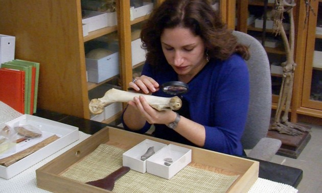 Briana Pobiner studies the bones of many different species of early humans, including Neanderthals, as part of the Smithsonian's Human Origins Program. (credit: Smithsonian)