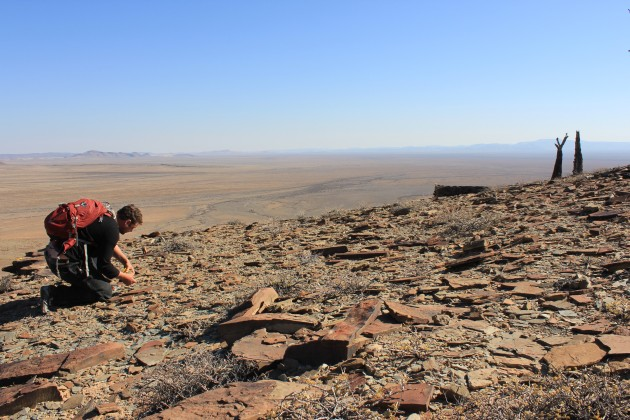 Simon Darroch searches for fossils in Namibia. (Sarah Tweedt, Smithsonian Institution)