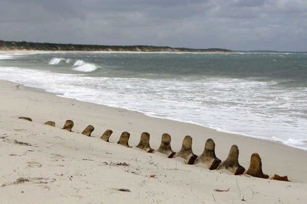 Whale bones lay partly exposed on a beach near Hopetoun, Australia. (Photo by Flickr user Dark Orange)