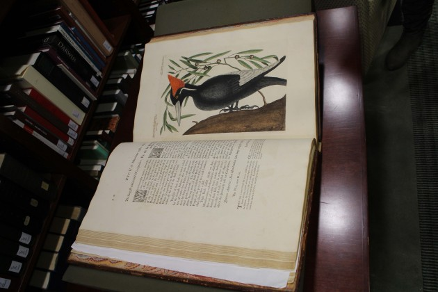 Before Audubon, There Was Another Mark Catesby, A Natural History of Carolina, Florida and the Bahama Islands, 1731