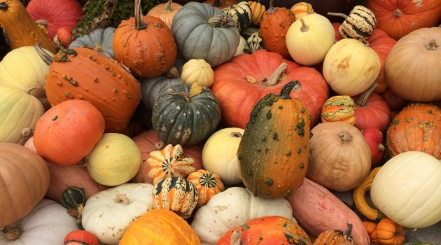 A variety of domestic squash gourds. (Photo by George Perry, Penn State)