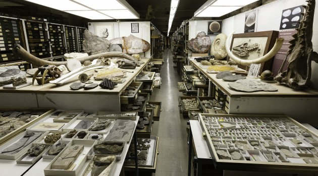 A view of one part of the Paleontology collection in the Musuem of Natural History, arranged by the addition of representative specimens from other parts of the three floors of fossils in the East Wing.