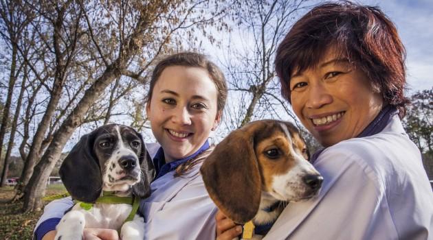 Jennifer Nagashima, SCBI doctoral fellow (right) and Nucharin Songsasen, SCBI scientist, hold two of the healthy domestic puppies born through in vitro fertilization. (Photo by Jeffery MacMillan)