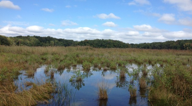 SERC's Global Change Research Wetland (Credit: SERC)