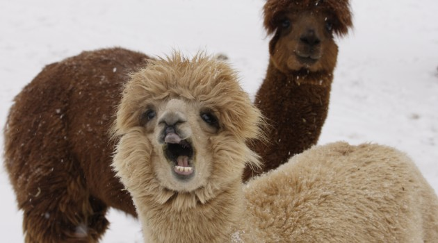 What happens at the National Zoo when it snows?