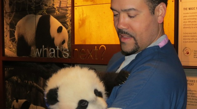 Juan Rodriguez with giant panda cub Bei Bei in November 2015. (Smithsonian's National Zoo photo)