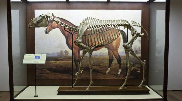 Photo courtesy of the International Museum of the Horse
