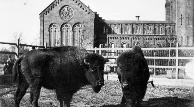 Smithsonian Institution Archives