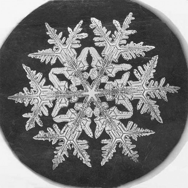 Snowflake Study through Photomicrography, 1890