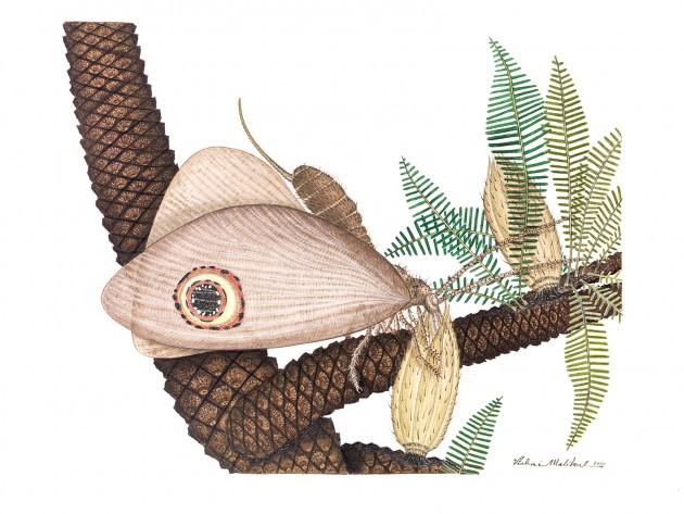 Kalligrammatid lacewing