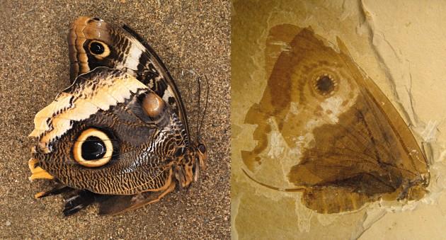 modern owl butterfly