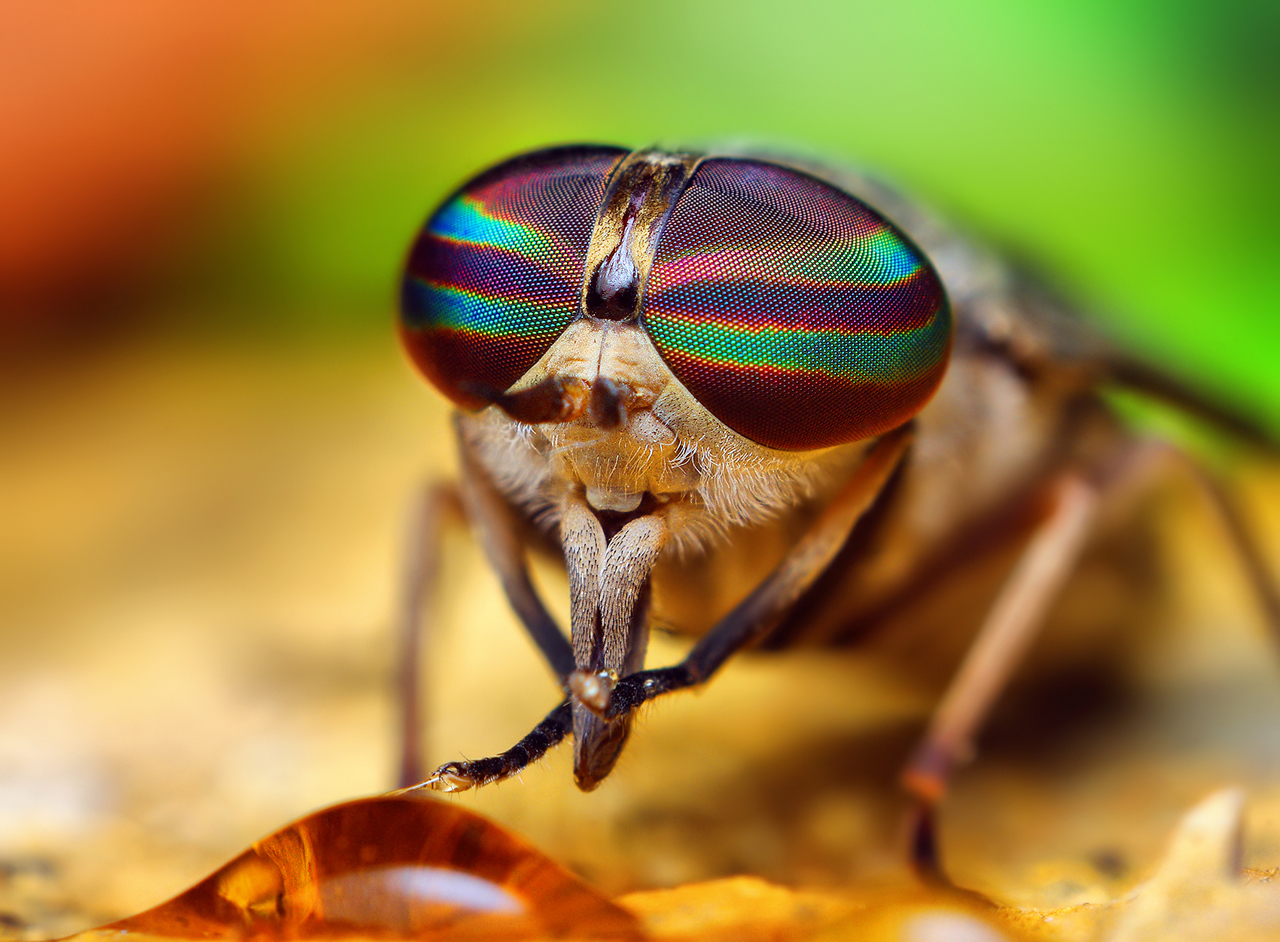 blood thirsty jungle horse flies catch big chill from smithsonian