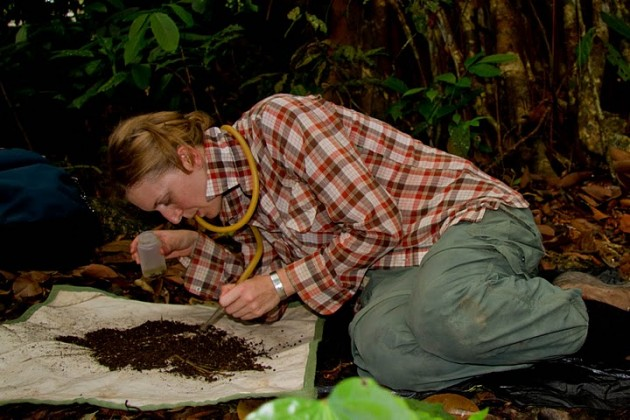 Smithsonian scientist Hannah Wood collecting and studying spiders in the Philippines