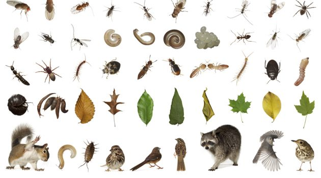 A selection of creatures revealed through inventorying one cubic foot from Hallett Nature Sanctuary in Central Park, New York City. (Image © David Liittschwager)