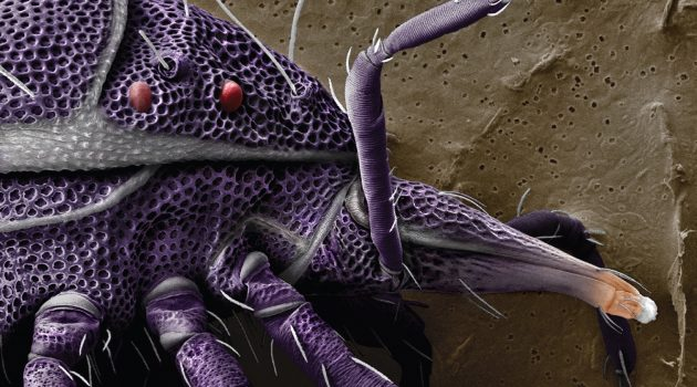 Enjoy Face Time with Seven of Earth's 3-5 Million Mite Species