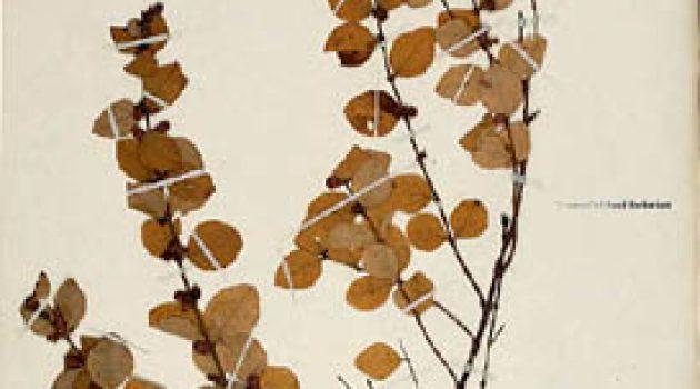 Digitizing the Smithsonian's Botany Collection