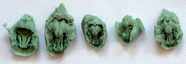 molds of bat noses and ears
