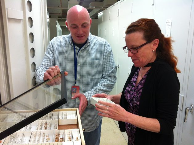 """""""A. Aegypti"""" specimens from the mosquito collection at the Smithsonian's Museum Support Center."""
