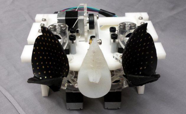robotic sonar head