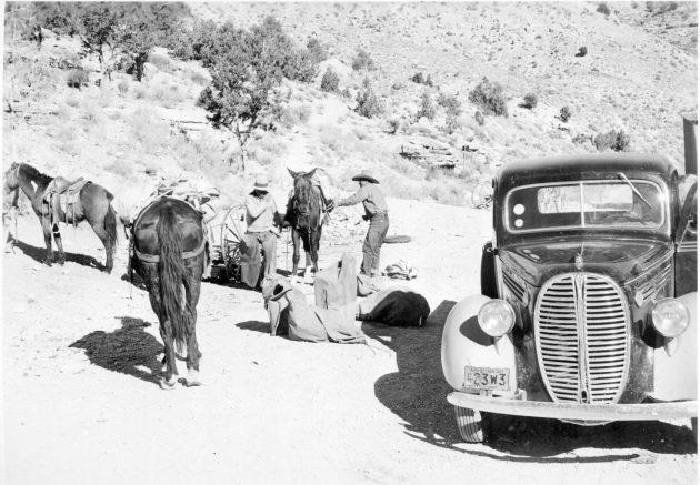 Mule train 1938.