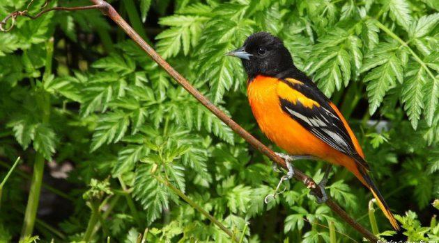 Why Birds Really Matter: Keith Gagnon