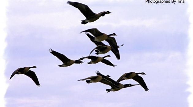 Why Birds Really Matter: Catherine McKenna