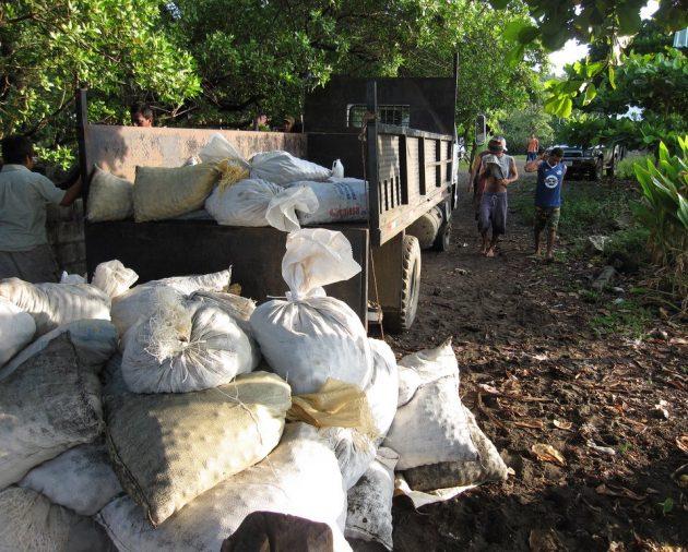 bags of turtle eggs
