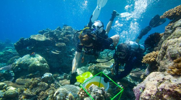 Biocube researchers in the Solomon Islands collect material inside a cube that was placed earlier on the sea floor. Back at their laboratory the material is examined to determine how many different species of plants and animals it contains. (Photograph by David Liittschwager)