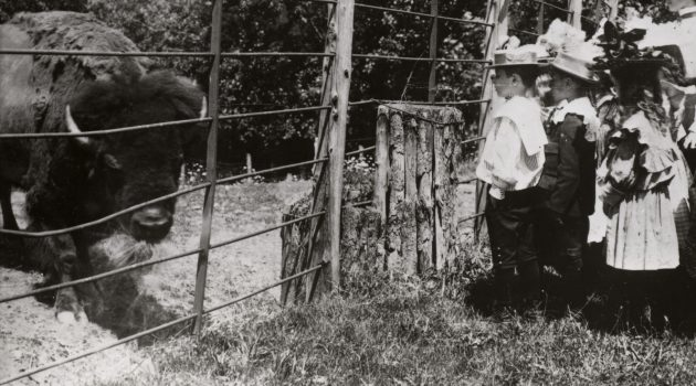 A group of school children in 1899 viewing the first bison at the National Zoological Park.