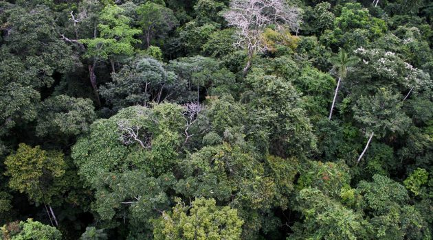 Riotously diverse canopy of Amazonian forest at Los Amigos Biological Station, Peru. (Photo by Jonathan Myers)