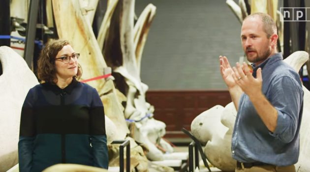 Why the Smithsonian has world's largest whale bone collection