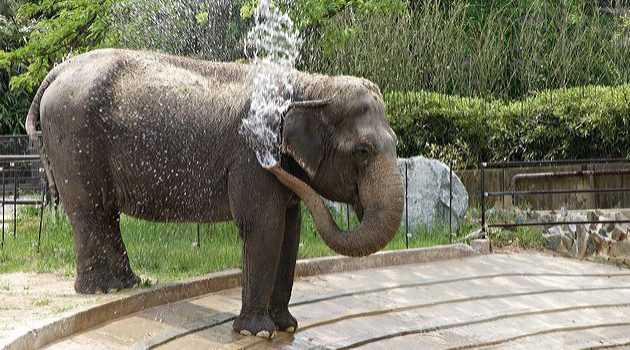 Celebrating Ambika's 56 years at National Zoo