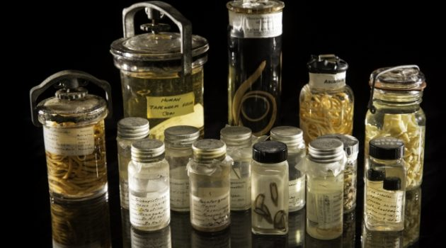 An assortment of specimens from the Smithsonian's National Parasite Collection at the National Museum of Natural History. The National Parasite Collection holds more than 20 million parasite specimens in connection with information about their geographic distribution and host animals. (Photo by Paul Fetters)