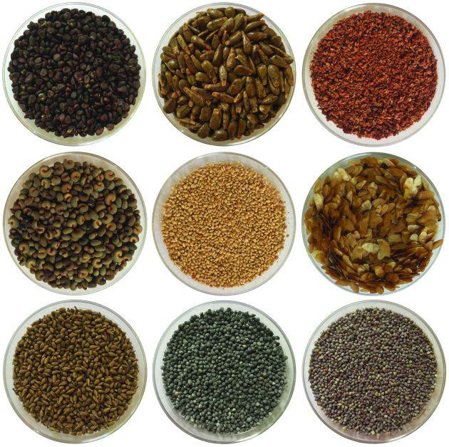 9 seeds