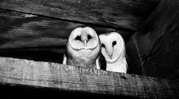 Owls in the Castle Tower by Michael Johnson, 1977, Smithsonian Archives—History Division, 96-929.