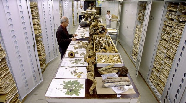 Staff in the Botany Department of the Smithsonian's National Museum of Natural History work with the extensive collections in the museum's herbarium.