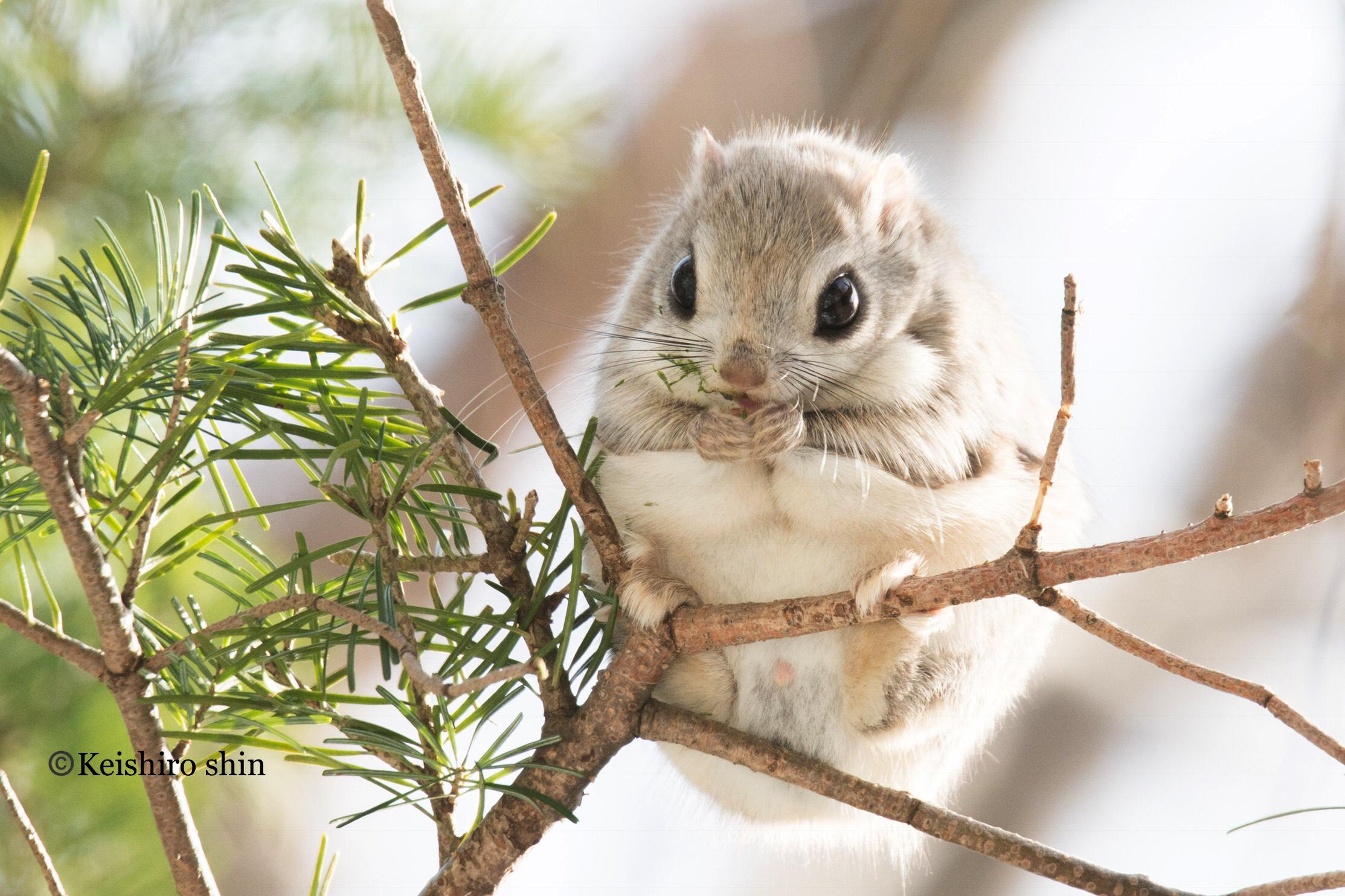 this squirrel appreciation day we have a few surprising squirrely