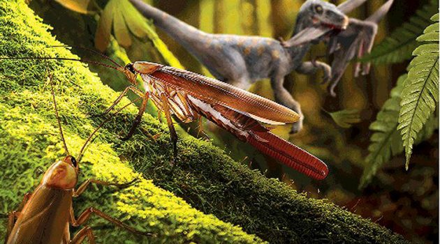 "A female cockroach ""P. yixianensis,"" center, with a long ootheca, pauses on a tree trunk in an early Cretaceous forest. (artwork by Dr Chen Wang)"