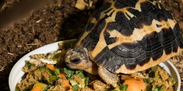 Five fun turtle and tortoise facts from the Smithsonian's