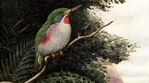 Smithsonian Libraries' copy of the first edition, Birds of the West Indies, Smithsonian's National Museum of Natural History